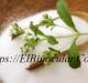 Stevia Planta ¿Para Qué Sirve? Y Beneficios.