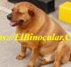3 Problemas De Tiroides En Perros Que Debes Conocer