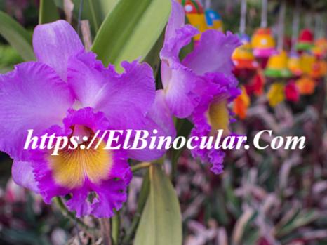 Cómo Cuidar Una Orquídea Después De La Floración
