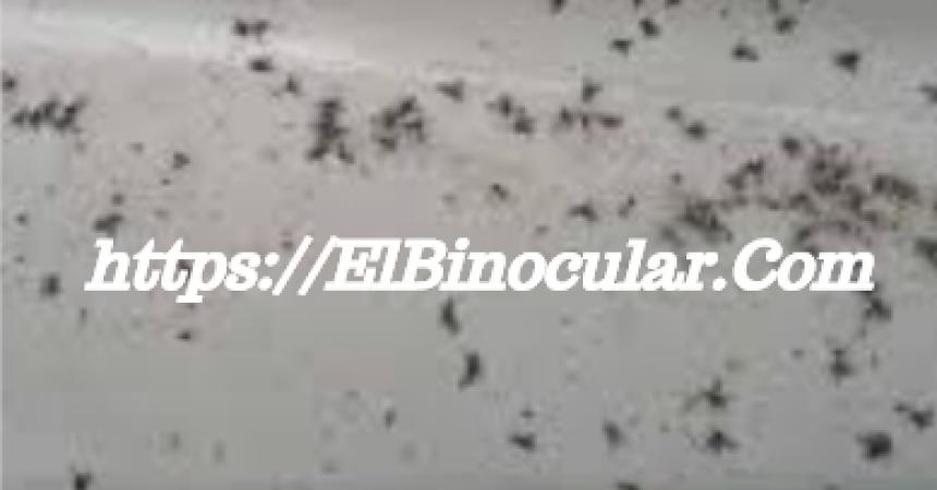 Cómo Eliminar Insectos En Casa Por Humedad
